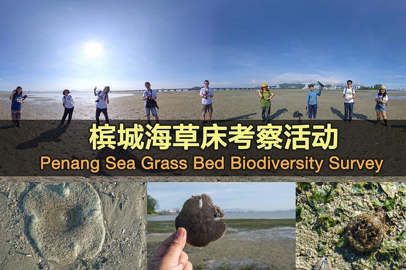 槟城中间滩马来西亚第二大海草床