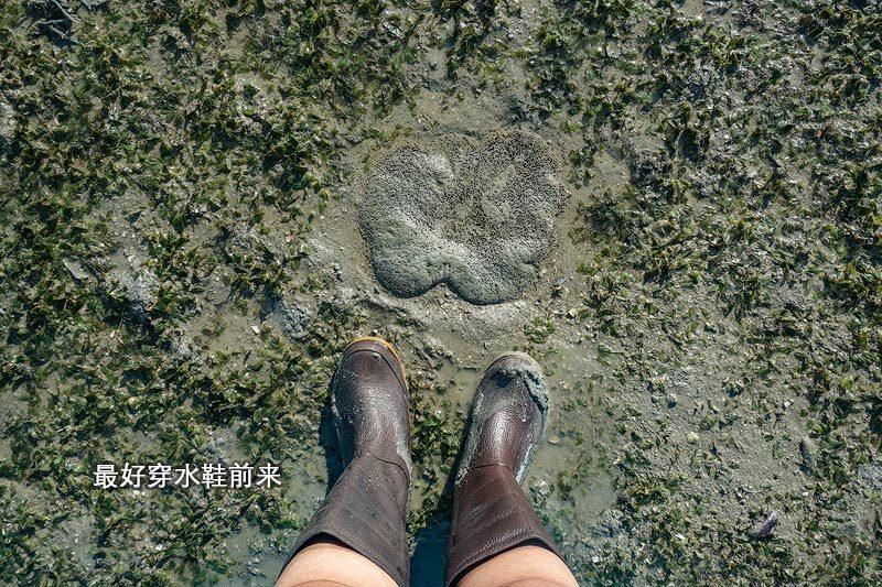水鞋是海草床最好的鞋