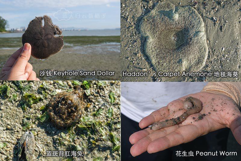 认识沿海海洋生物