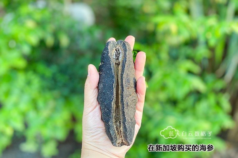 海参的长度