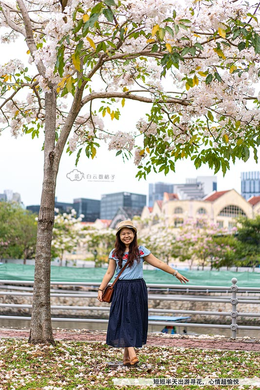 风铃木 在新加坡河畔
